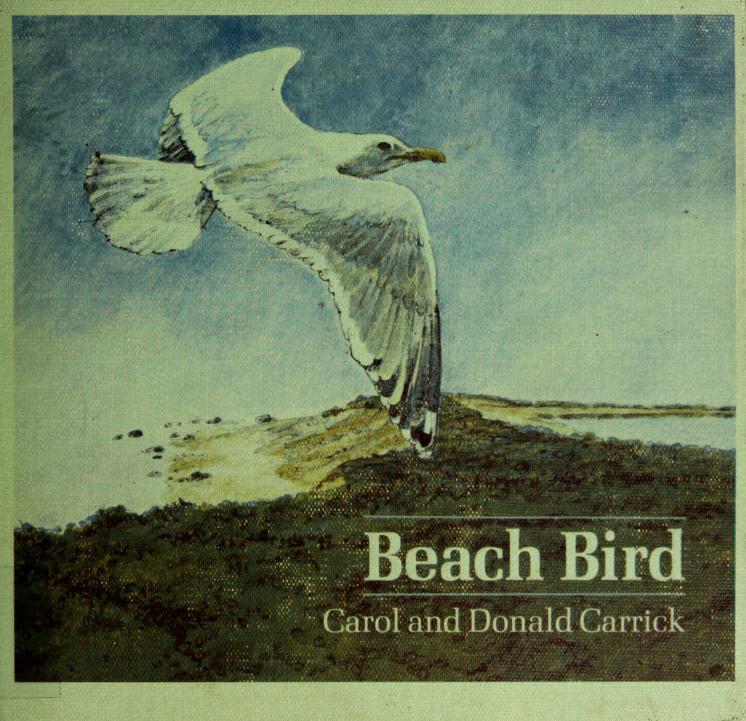 Beach bird by Carol Carrick